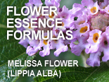 Flower Essence Formulas